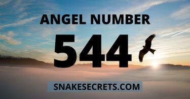 ANGEL NUMBER 544