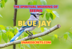 THE SPIRITUAL MEANING OF SEEING BLUE JAY