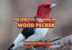THE SPIRITUAL MEANING OF WOOD PECKER