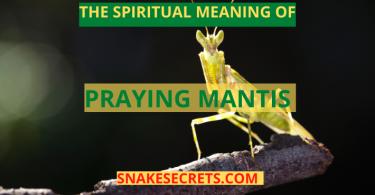 THE SPIRITUAL MEANING OF PRAYING MANTIS