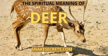 THE SPIRITUAL MEANING OF DEER