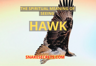 THE SPIRITUAL MEANING OF SEEING a Hawk